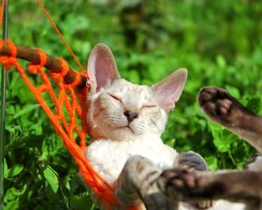 Deixe o Seu Gato ir de Férias! 1, 2 Ou 3 Noites em Hotel Felino | Porto