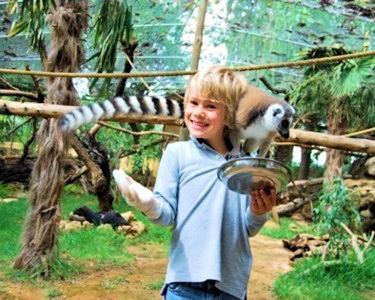 KrazyWorld Zoo-Bilhete Criança/Idoso