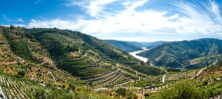 Alto Douro | 1 ou 2 Noites Românticas no Paraíso! Quinta Rota D´Oliveiras