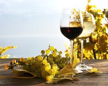 Visita e Prova de Vinhos Comentada