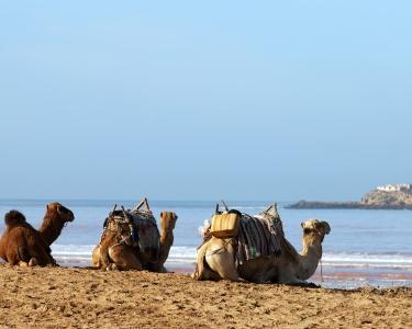 Estância Balnear em Marrocos - 8 Dias Tudo Incluído