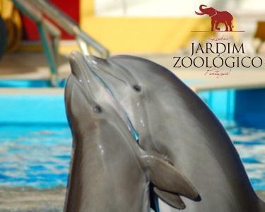 Bem-Vindo ao Jardim Zoológico | Bilhete Duplo + Foto Zoo