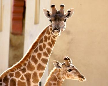 Visita ao Jardim Zoológico de Lisboa | 2 Pessoas + Foto