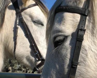 Passeio Romântico a Cavalo - 1 Hora   Aldeia Histórica de Monsanto
