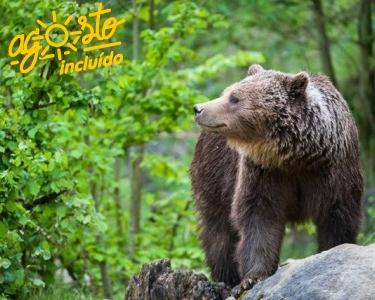 Roménia | 2 a 4 Nts em Reserva Natural + Bear Tracking