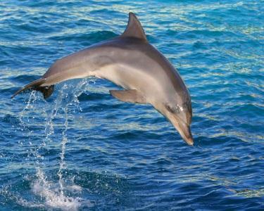 4H de Cruzeiro & Observação de Golfinhos | Arrábida