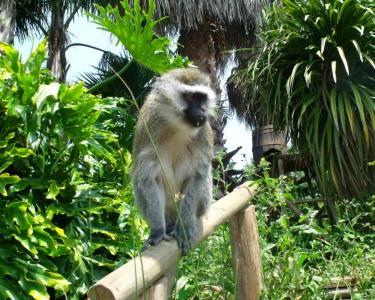 Parque dos Monges & Refeição | Bilhete Adultos & Criança
