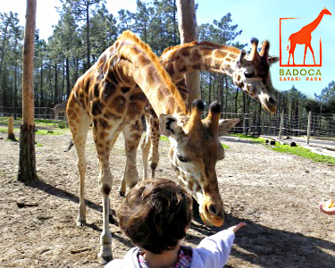 Badoca Safari Park - Bilhete de Criança