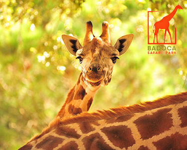 Badoca Safari Park | Bilhete de Criança