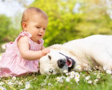 Sessão Fotográfica Pet Love | 50 Fotos