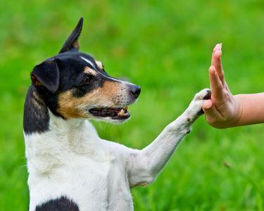 Treino para Todo o tipo de Cães e Idades | Um Mimo para o Seu Amigo de 4 Patas | Porto