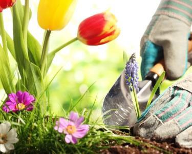 Poupe Tempo Enquanto Tratam do Seu Jardim - 1 Hora de Jardinagem