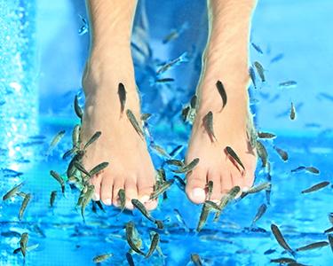 Tratamento Pedicure Peixe Garra Rufa + Hidratação Podal | Estoril