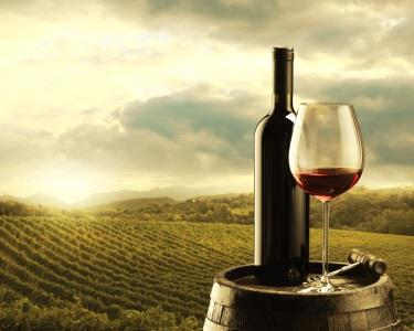 Seja um Verdadeiro Apreciador de Vinho | Curso de Enologia