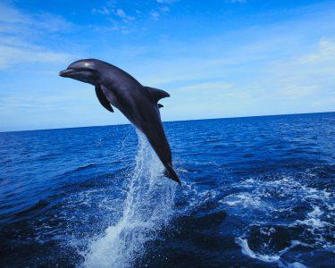 Noite 4* na Arrábida & Cruzeiro Observação de Golfinhos no Sado