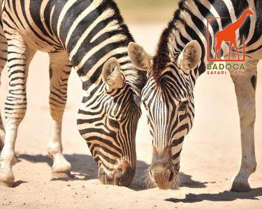 Badoca Safari Park | Bilhete de Adulto