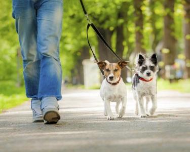 O Seu Cão Arrasta-o? Ensine-o a Andar Sem Puxar a Trela | COMtakto