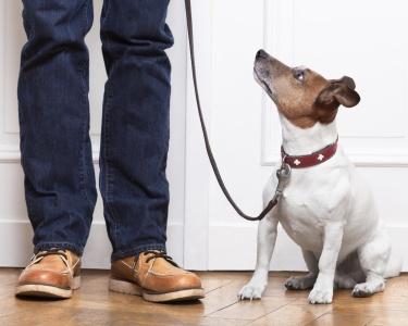 Aulas de Focalização para Cão | Sistema de Treino Positivo