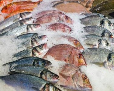 Workshop de Peixe na Mesa | Santa Maria da Feira