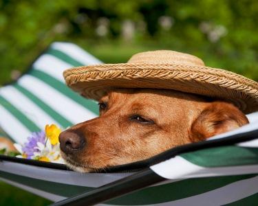 Boa Vida de Cão! Banho + Tosquia para o seu Fiel Amigo