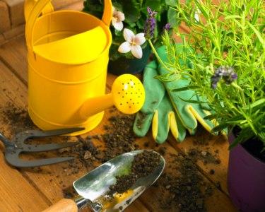 Workshop Agricultura Biológica  Ou Plantas Aromáticas Ou  Vegetarianismo