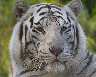 Bem-Vindo ao Zoo da Maia | Bilhete Duplo para Adultos