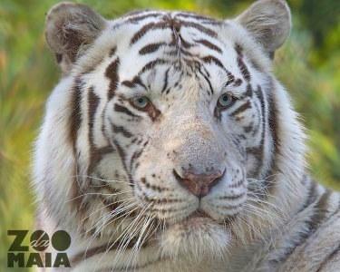 Bilhete Duplo para Adultos   Zoo da Maia