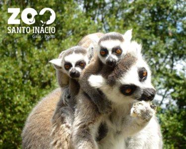 Zoo Santo Inácio | Bilhete Duplo para Adultos - Viaje pelo Mundo!