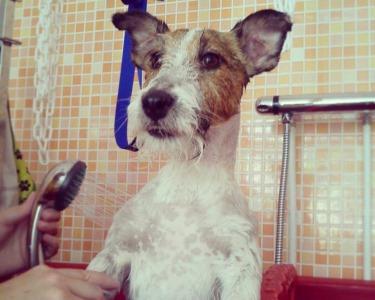 Spa c/ Banho e Tosquia p/ Cães ou Gatos | Mimos para o Melhor Amigo