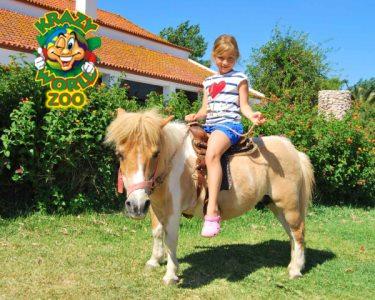 Krazy World Zoo | Dia de Máxima Diversão na Natureza