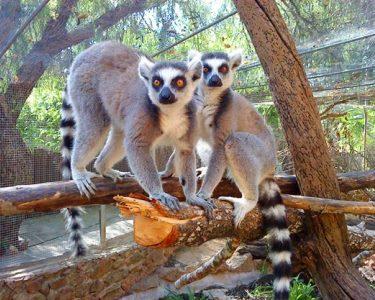 Krazy World Zoo | 1 Dia de Máxima Diversão com a Natureza