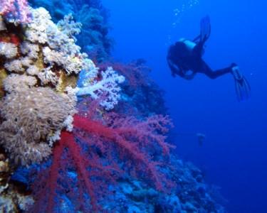 Eco-Mergulho | Conheça um Mundo Submerso | 5 Locais à Escolha