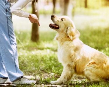 Workshop de Obediência Canina | Eduque o seu Melhor Amigo - Sintra