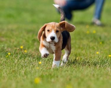 Workshop de Obediência para Puppies | 3 Horas - Sintra