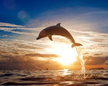 Noite 4* & Cruzeiro Observação de Golfinhos no Sado   Arrábida