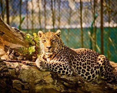 Zoo da Maia - Bilhete Duplo para Adultos