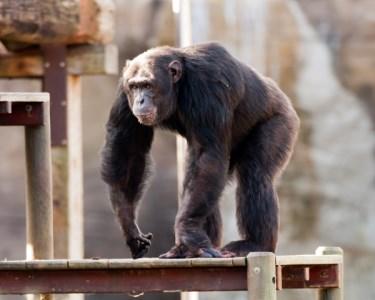 Zoo de Lagos | Bilhete de Adulto + Criança
