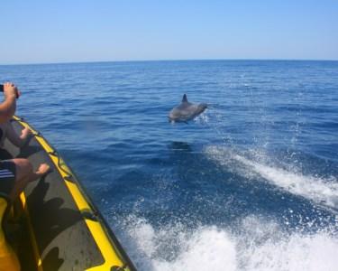 Passeio de Barco com Observação de Golfinhos & Grutas   Albufeira
