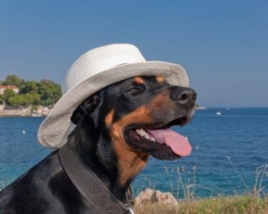 Glamour Canino! Banho com Higiene para o seu Cão | Cão do Bairro