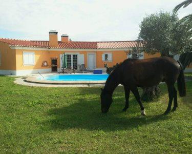 Aventura de Verão! Baptismo de Cavalo + Piscina & Almoço para Dois