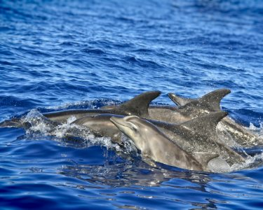 Férias no Algarve! Cruzeiro de Observação Golfinhos e Tubarões   4h