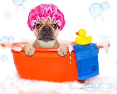 Serviço de Banho ao Cão! Spa Completo com Higienização | Tocão