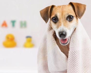 O Banho é para Todos! Spa Completo com Higienização para Cães   Tocão