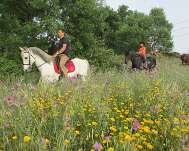 Maravilhoso Passeio a Cavalo pela Lezíria do Tejo | 1 ou 2 Pessoas