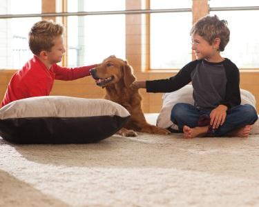 Impecável! Lavagem de Carpete ou Tapete | Lavcarpet | Grande Lisboa