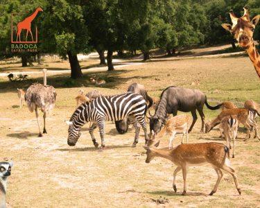 Dia Mágico na Natureza do Badoca Safari Park - Bilhete de Adulto