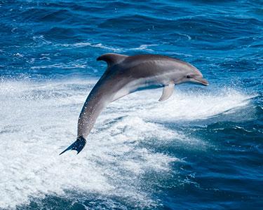 Sealife Emotions! Cruzeiro de Observação Golfinhos e Tubarões no Algarve | 4h