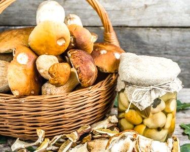 Workshop Prático de Produção de Cogumelos em Troncos c/ Ofertas | 3 Datas | Benavente