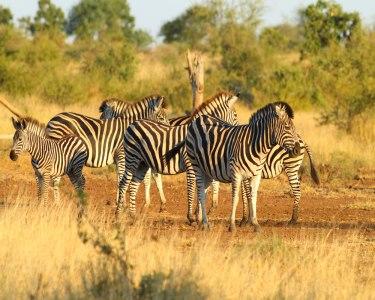 Aventure-se em África  | Maputo + Kruger + Gorongosa | Voos + 7 Noites