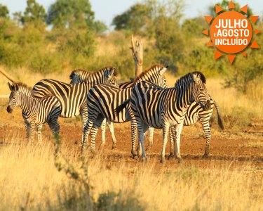 Safari Africano   Maputo + Kruger + Gorongosa   Voos + 07 Noites